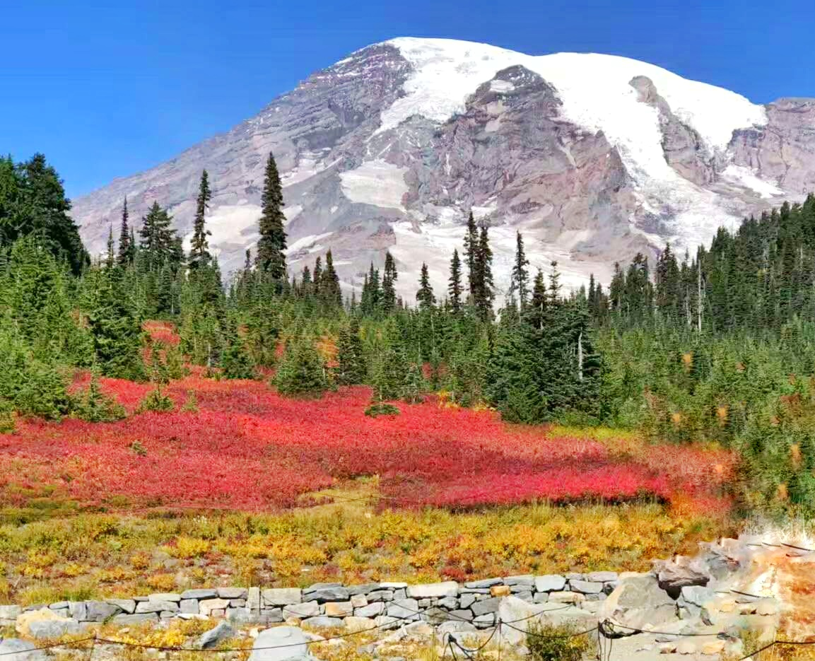 Olympic National Park+Mount Rainier National Park 2-Day Tour